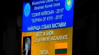 Выставка собак Киев 30 августа SOPHIA OF KYIV 2015 СОФІЯ КИЇВСЬКА   2015 BEST IN SHOW