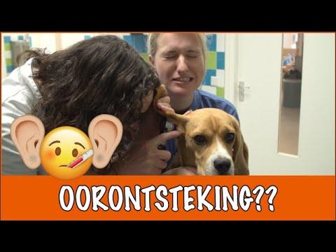 Heeft Matzy een oorontsteking? | DierenpraatTV