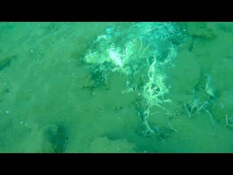 Indonesia (Pulau Weh) - Hydrothermal fumerole / Underwater volcano