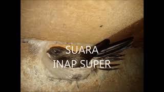 SUARA INAP SUPER