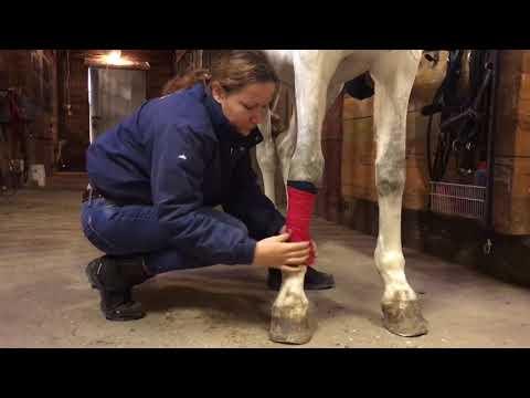 Как правильно бинтовать ноги лошади? Онлайн школа Эклектика