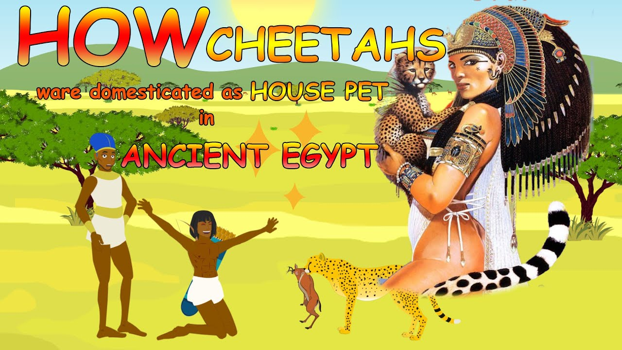 How cheetahs ware domesticated as house pet in Ancient egypt