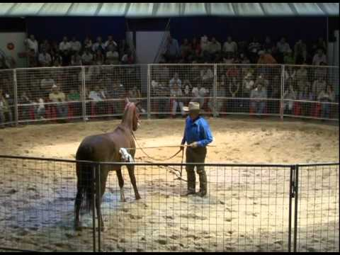 MONTY ROBERTS -- JOIN-UP 1ª PARTE from YouTube · Duration:  6 minutes 9 seconds