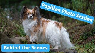 Papillon Dog Photography Session