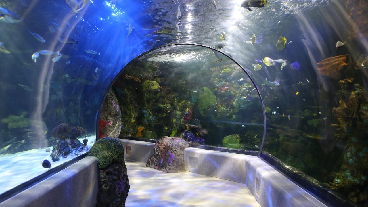 Virginia Aquarium In Va Beach