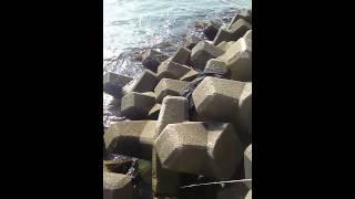 福岡 志賀島 イワガニ釣り