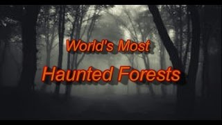 World's Most Haunted Forests