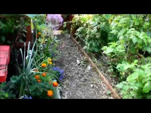 Allotment Gardening  Growing Asian Vegetables or Asian Greens