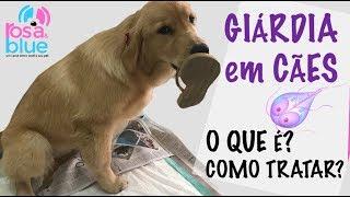 Giardia sintomas cachorro Gyógyszerek az emberek parazitáira, széles spektrumú hatással