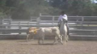 concours tri de bétail aux pradeaux