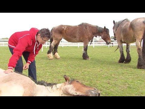 Gnadenhof: Wo gequälte Pferde zur Ruhe kommen können