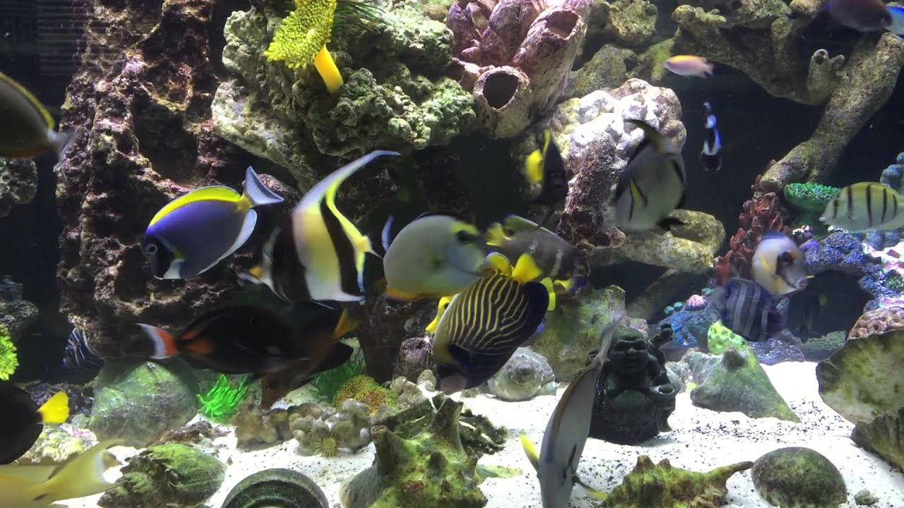150g fully stock fish only reef tank youtube for Fish only saltwater tank
