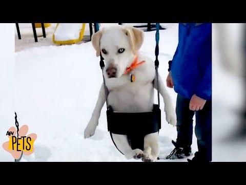 Pets Find Winter Wonderland | The Best Cute, Funny Animal Videos Compilation #14 | AFV Pets