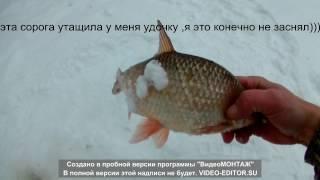 отличная рыбалка на ямале зимой. крупная сорога , язь,щука(слияние чукусомаль ноябрьск., 2017-02-22T19:26:59.000Z)