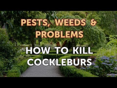 How to Kill Cockleburs