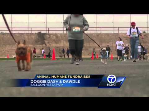 Doggie Dash & Dawdle Held In Albuquerque