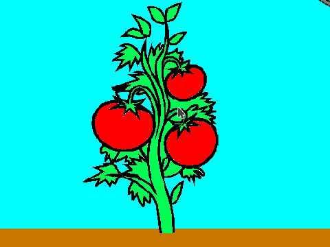 Новый мульт-урок Алексея Гусева. Как правильно поливать помидоры? без регистрации и смс