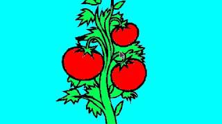 Новый мульт-урок Алексея Гусева. Как правильно поливать помидоры?(, 2017-02-02T16:52:45.000Z)