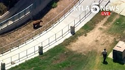Bear spotted near Los Angeles Mission College campus