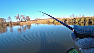 ОКУНЬ 43 го РАЗМЕРА С таким толстяком и щуки не надо Осенняя рыбалка на спиннинг