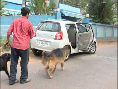 Security Dog for Rent in Trivandrum