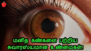 மனித கண்களை பற்றிய சுவாரஸ்யமான உண்மைகள்! | Human Eye Interesting Facts | kudamilagai channel