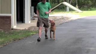 Alpha Dog Training Ga - Layla