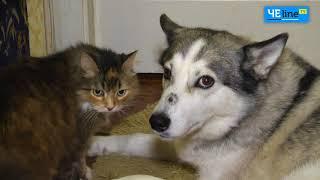 Черниговские коты празднуют свой день