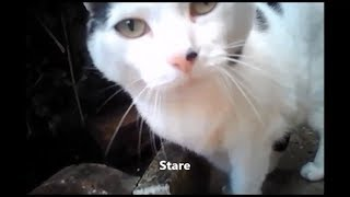 Snippet: Cats wearing cameras