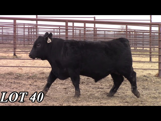 Mead Angus Farms Lot 40