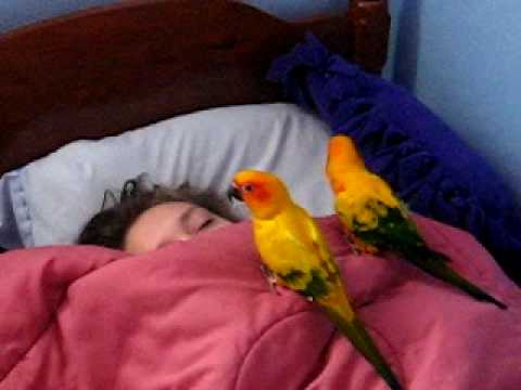 the birds waking up my sister