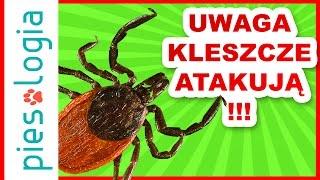 UWAGA - kleszcze atakują!!!