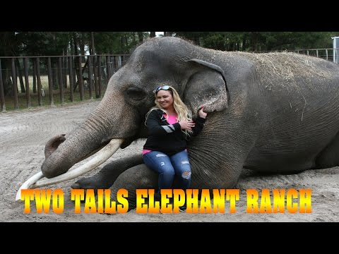 Two Tails Ranch - Elephant Care Facility in Williston Florida! from YouTube · Duration:  3 minutes 9 seconds