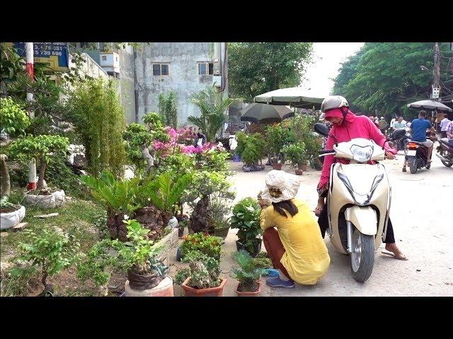 Chợ cây cảnh Hữu Bằng phiên này đông quá, tham khảo giá cây - bonsai market in Huu Bang