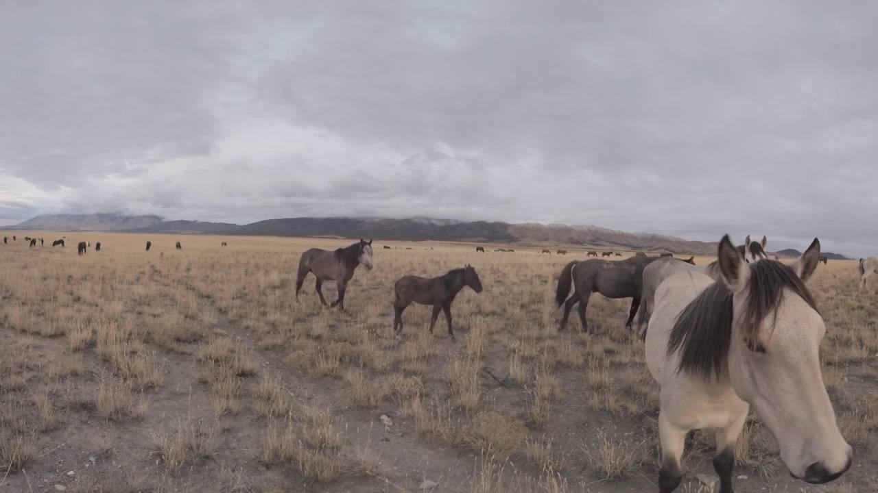 The Wild West 360°