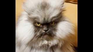Прикол: Коты с суровым выражением морды ч.3