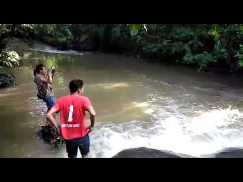 Mancing Sidat Besar Banget Di Sungai