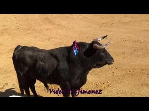 Plasencia (Cáceres) 08/04/2017 - Grupo 1 - HD