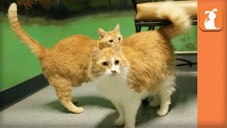 Bonded Pair of Cats Been at Shelter for 7 Months Waiting for New Home