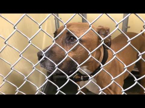 My Visit to the Sioux Falls Humane Society - July 2014. Hello Awesome Animals!
