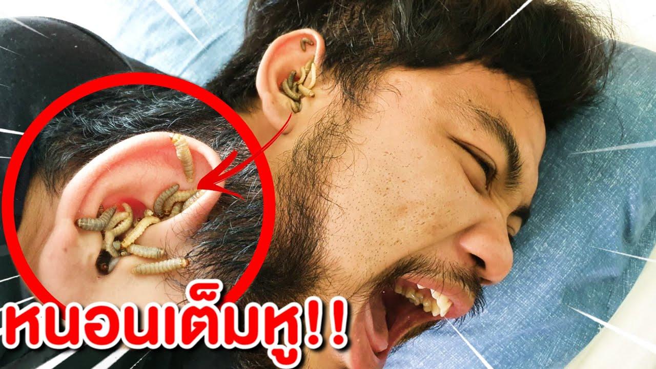 ระวังอันตราย คนสกปรก ไม่ยอมอาบน้ำ หนอนขึ้นหู!!