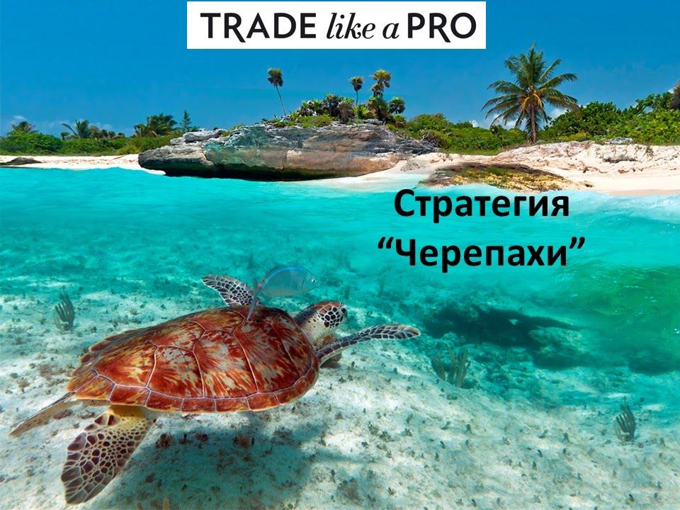 Кто такие черепахи в форекс как купить нефть на бирже физическим лицом