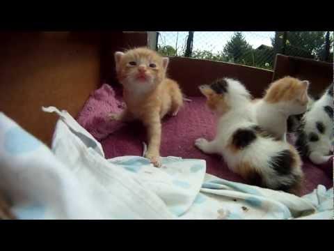 Baby Kittens - 3 weeks old