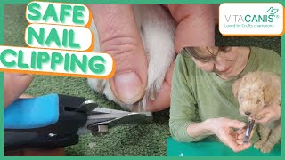 HOW TO CLIP YOUR DOGS NAILS STRESS FREE  dog grooming with aromatherapy