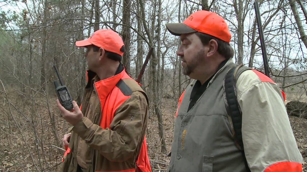 Using GPS Collars on Beagles During the Hunt