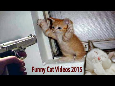 funny cat videos 2015 – Best cat New