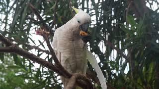 Hanya Dengan Tali Senar Kalian Bisa Nangkap Semua Burung