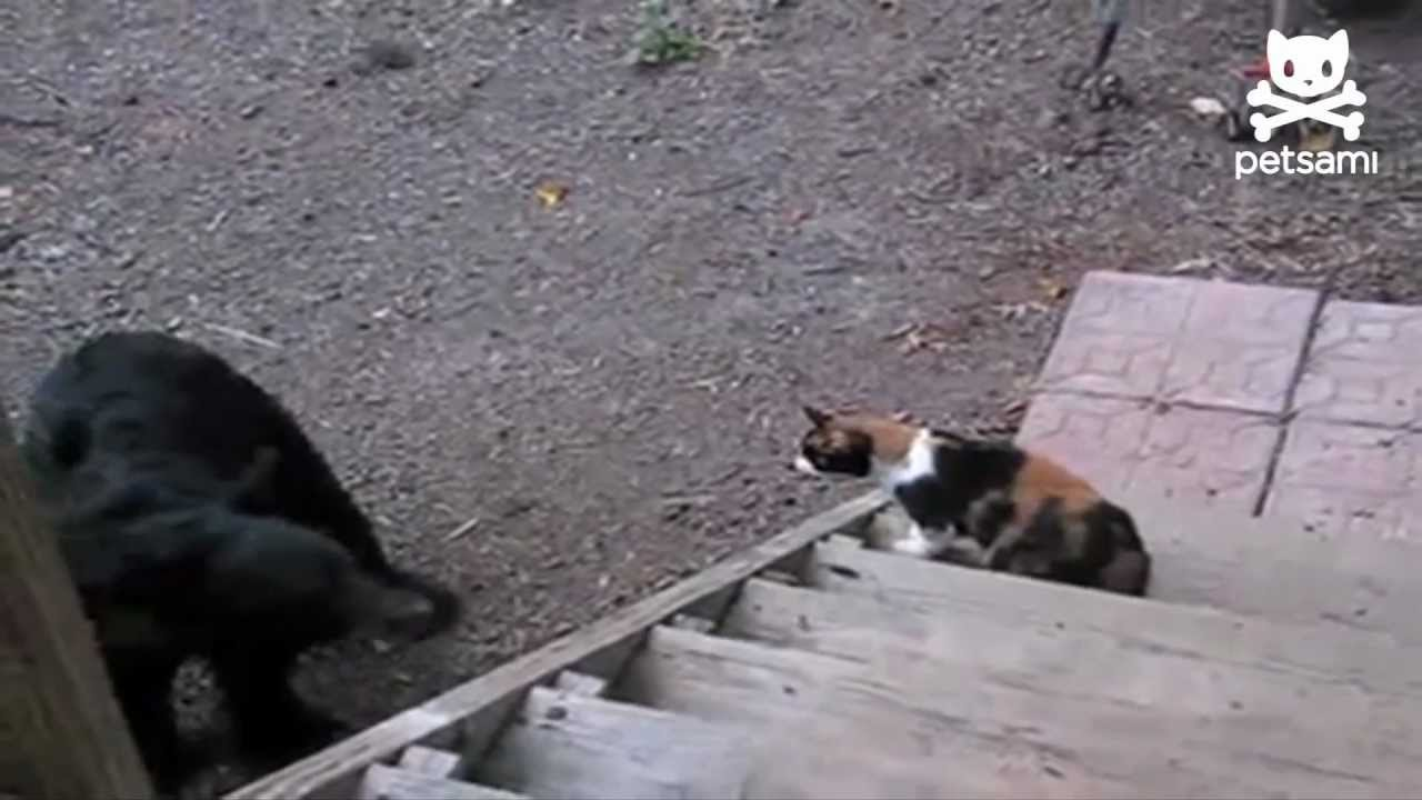 Stop Cat From Swatting Dog