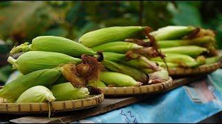1 ngày làm vườn cực nhọc cùng món lạ từ bắp ngô   A hard gardening day & the strange food from corn