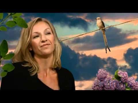 EBBA FORSBERG  Sparv ( Bird on the Wire )